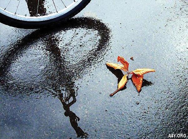 đạp xe trên con đường mưa