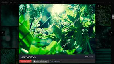 Shutterstock Spectrum, presentación de diapositivas.