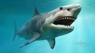 Shark शार्क मासा