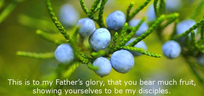 This is to my Father's glory, that you bear much fruit, showing yourselves to be my disciples.