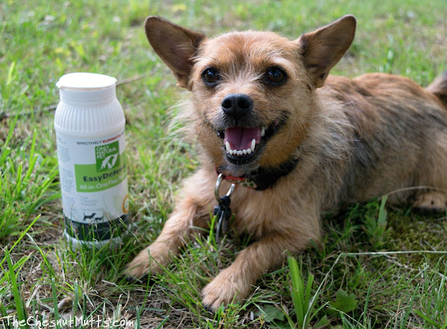 Mini Review: Only Natural Pet EasyDefense All-In-One Flea Remedy