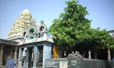 Kamakshi Amman Temple Sthala Vriksha