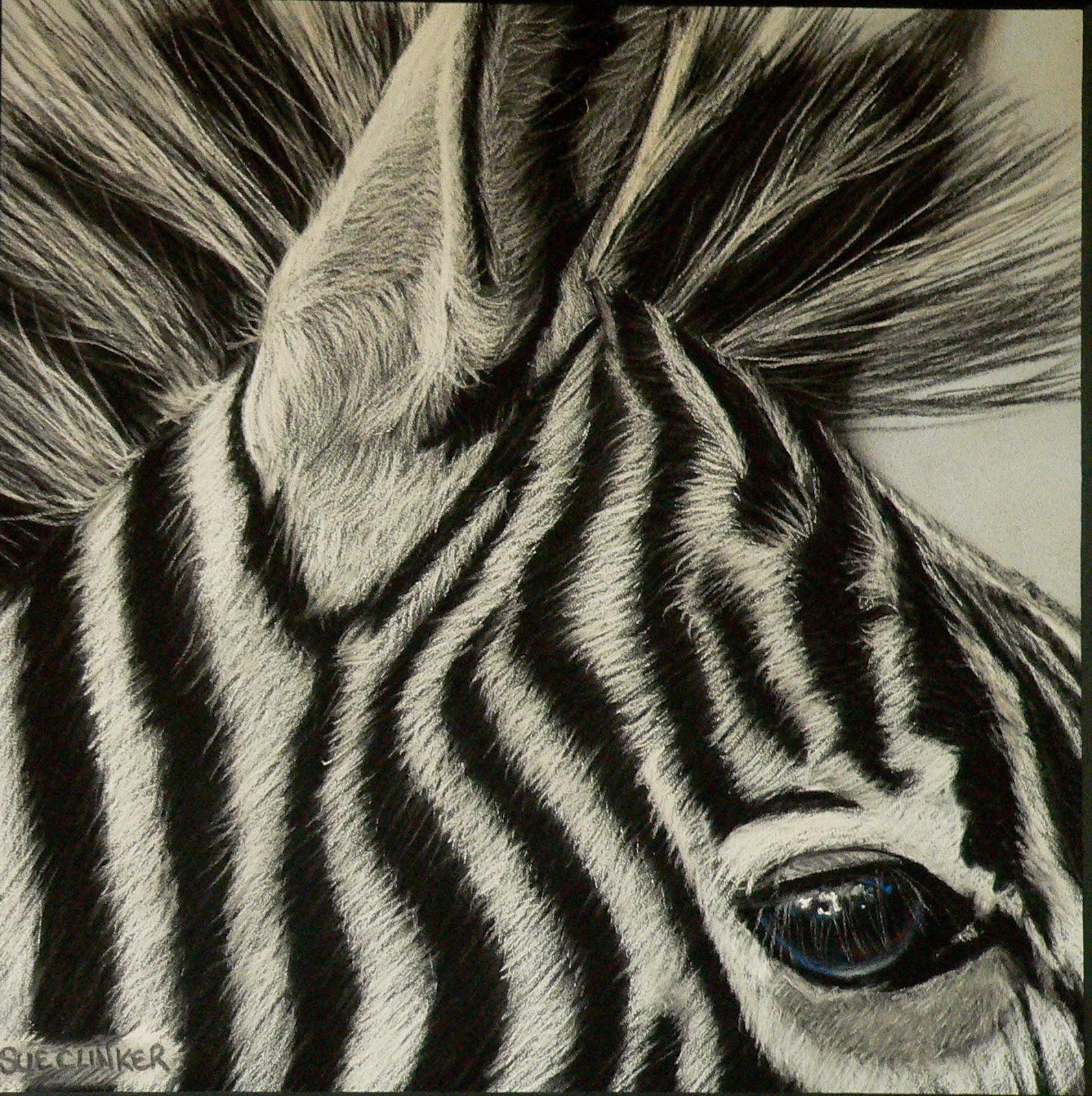 Pencilpix By Sue Clinker 05 03 I Ve Earned My Stripes