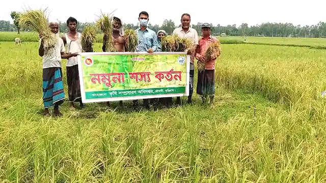 রৌমারীতে মুড়ি ফসল উৎপাদনে কৃষকের ব্যাপক সাড়া