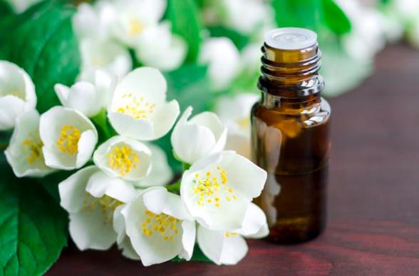 Tác dụng của tinh dầu hoa nhài đa dạng, phong phú và hữu ích