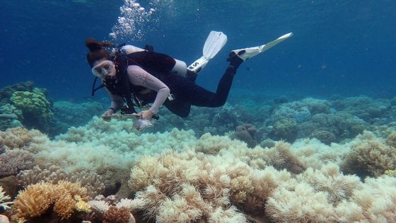 Current Status of the Great Barrier Reef, Australia