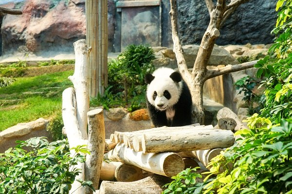 macau giant panda pavillion
