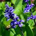 Recomendaciones de Protección Civil por piquetes de abejas