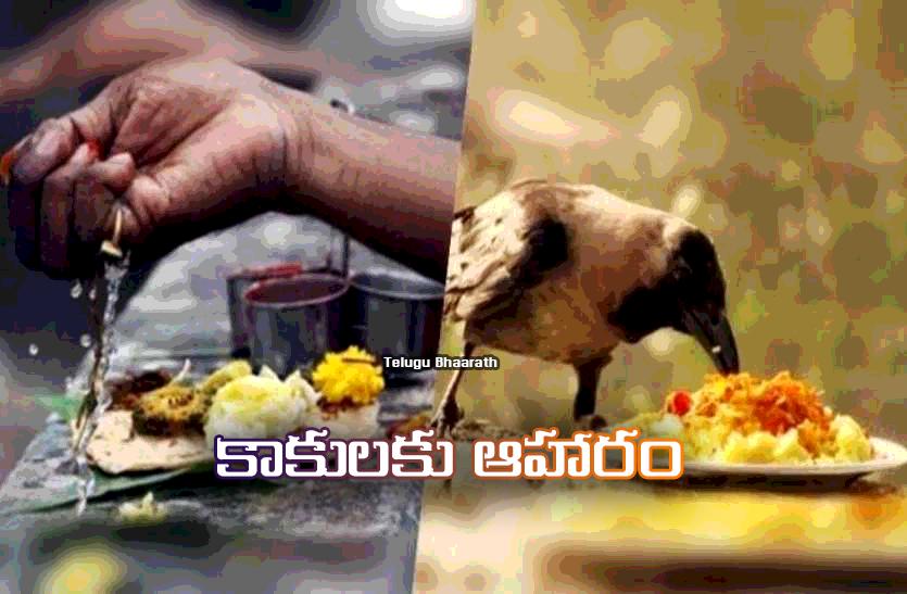 కాకులకు ఆహారం ఎందుకు పెట్టాలి? - Kaakulaku Aaharam, Why to feed crows?
