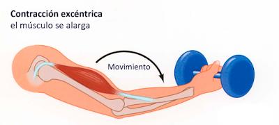 Tipos de contracciones en fisioterapia