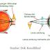 Materi Cahaya dan Optik Part 8 - Rabun Dekat dan Rabun Jauh