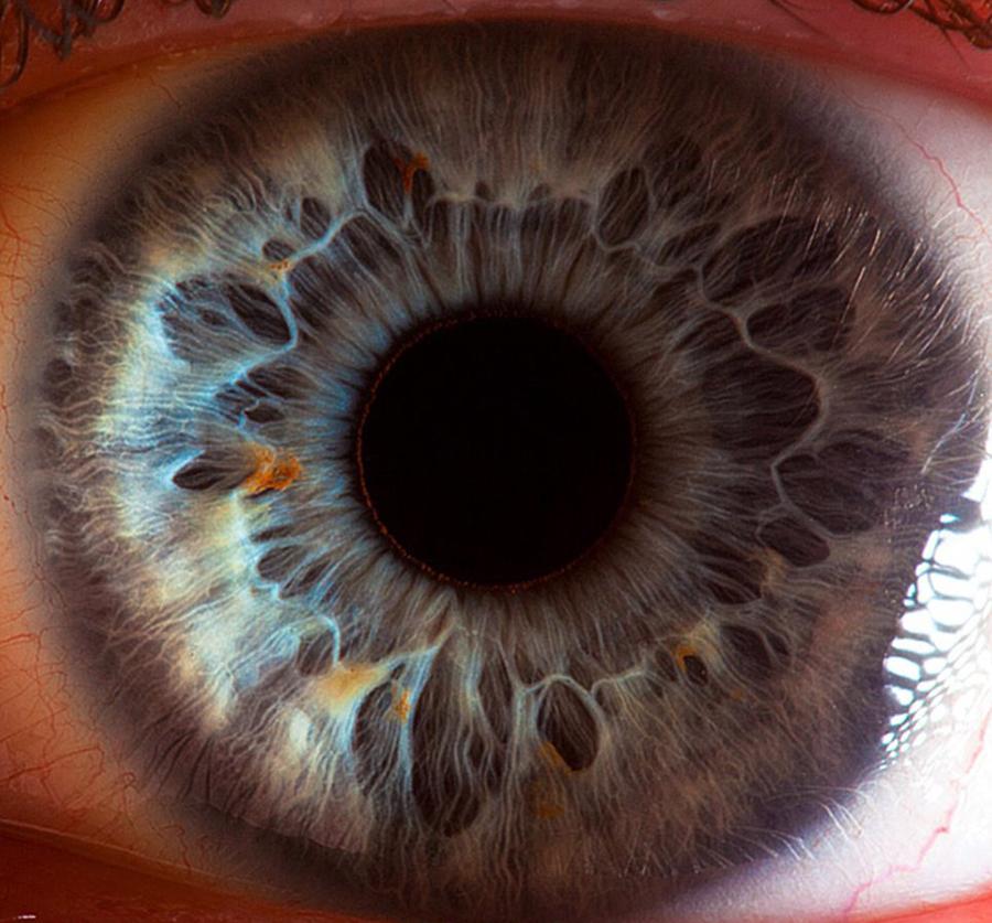 Iris dna retina mata manusia yang membuat mata melihat warna