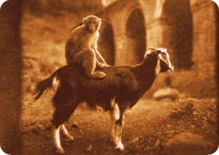 Monkeys Goats Stock Markets