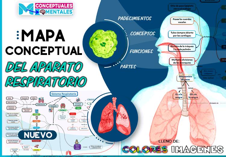 nuevos diseños de mapas conceptuales sobre el aparato respiratorio
