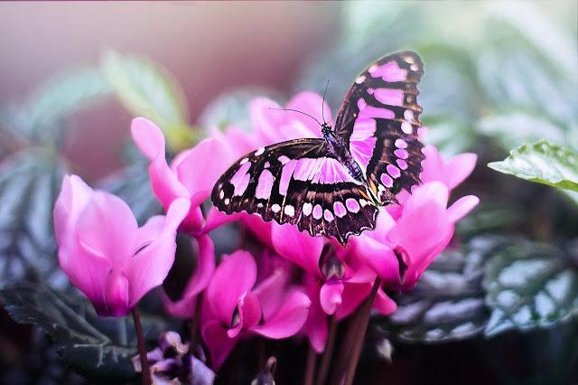 borboleta-transformação-mudança