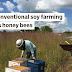 Como a agricultura convencional de soja mata as abelhas