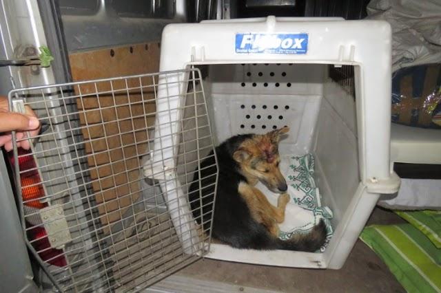Elfogták a férfit, aki kalapáccsal verte fejbe kutyáját