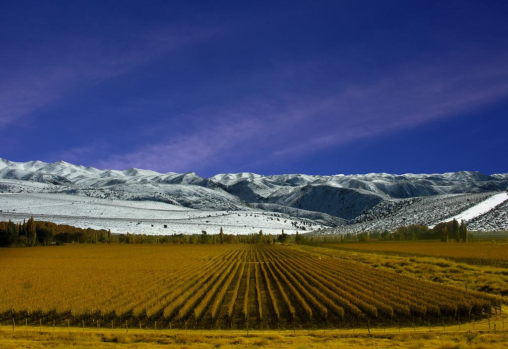 high altitude winery in mendoza argentina