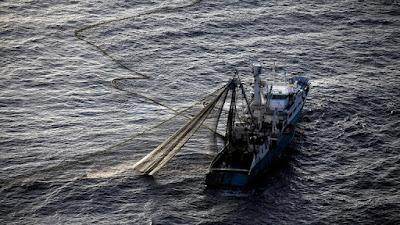 أسترالي يصطاد سمكة تونة تزن 271 كغم
