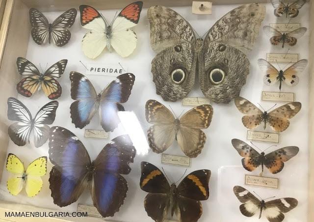 mariposas Museo Ciencias Naturales Sofía Bulgaria