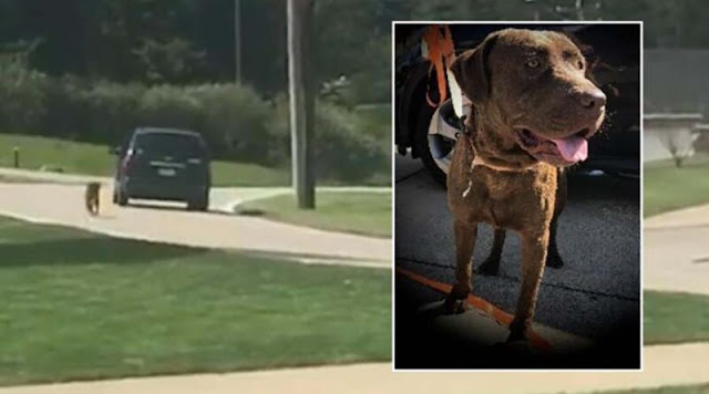 Душераздирающие кадры показывают, как собака гонится за уезжающей машиной своего владельца, когда он бросает своего питомца на обочине дороги вместе с кроватью – Видео!