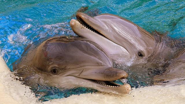 「シーワールド」の人気者イルカ2匹の写真