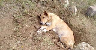 Άνθρωποι έθαψαν σκύλο ζωντανό στην Παλλήνη – Εξείχε μόνο το κεφάλι του
