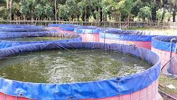 Anggota DPRD Epi Kampai Berdayakan Masyarakat dengan Membudidayakan Ikan Lele