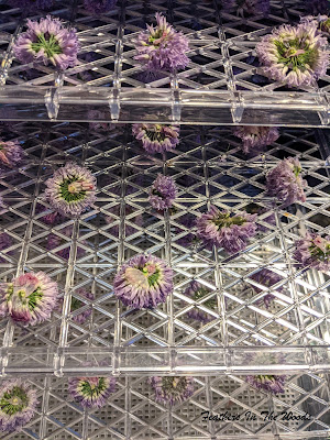 Chive blossoms on dehydrator trays