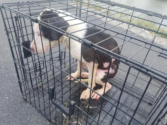 Израненного щенка закрыли в клетке и бросили в ледяное озеро. Рыбак не раздумывая кинулся его спасать