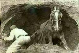 Kisah Kuda Yang Terperosok ke Dalam Sumur
