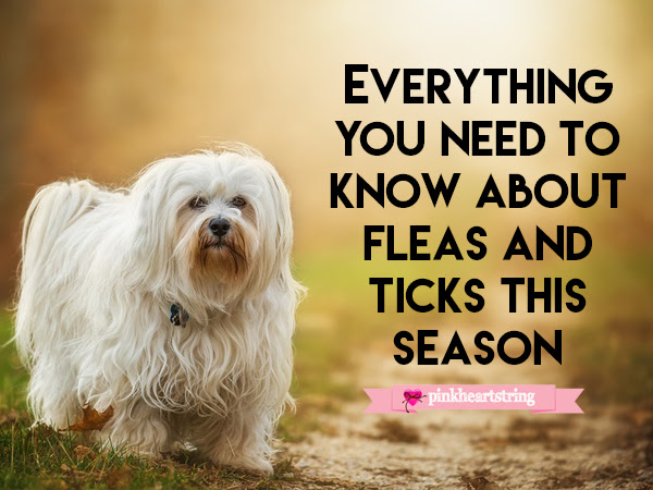 Everything You Need to Know About Fleas and Ticks This Season
