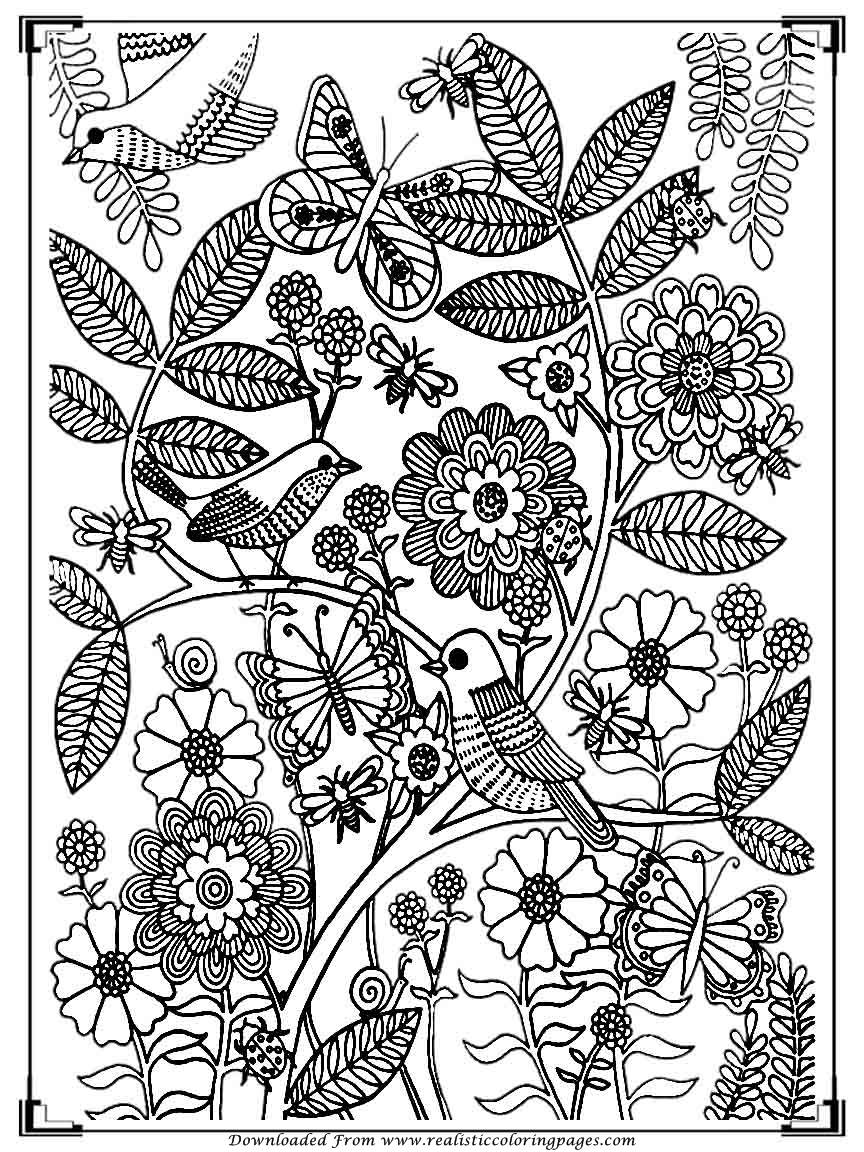 Printable Birds Coloring Pages For Adults  Realistic -2402