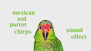 learn animal parrot sounds