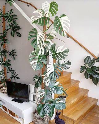 Esta enorme planta neutraliza la energía tan rápida y agresiva de una escalera como esta