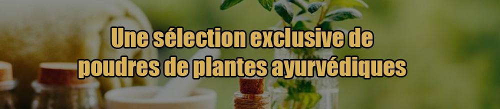 Une sélection exclusive de poudres de plantes ayurvédiques