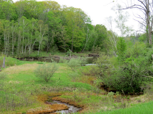 spring trees beside Manistee River