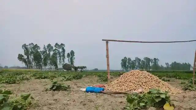 আলুর ভালো ফলন ও দাম পেয়ে খুশি বকশীগঞ্জের চাষিরা