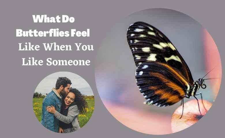 What Do Butterflies Feel Like When You Like Someone