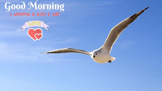 White Bird Good Morning Images