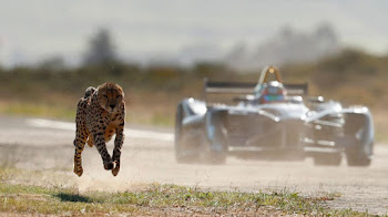 Formula E VS Guepardo ¿Quien es mas veloz?