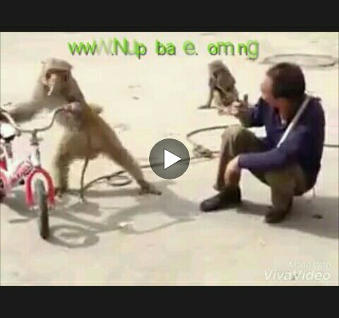 VIDEO: Funny Stupid Monkey (Funny Video)