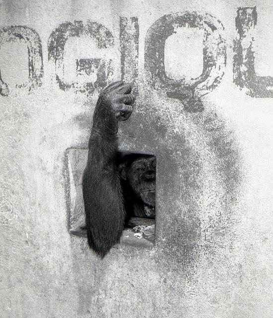 Entrée du zoo de Bobo