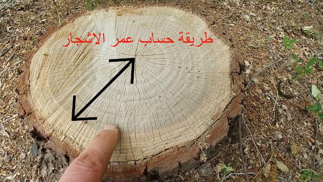 كيفية حساب عمر شجرة بالطرق الجديدة