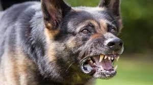 خطير و بالصور: كلب ينهش طفلا بإنزكان .. وأسرته تناشد تحقيقا أمنيا