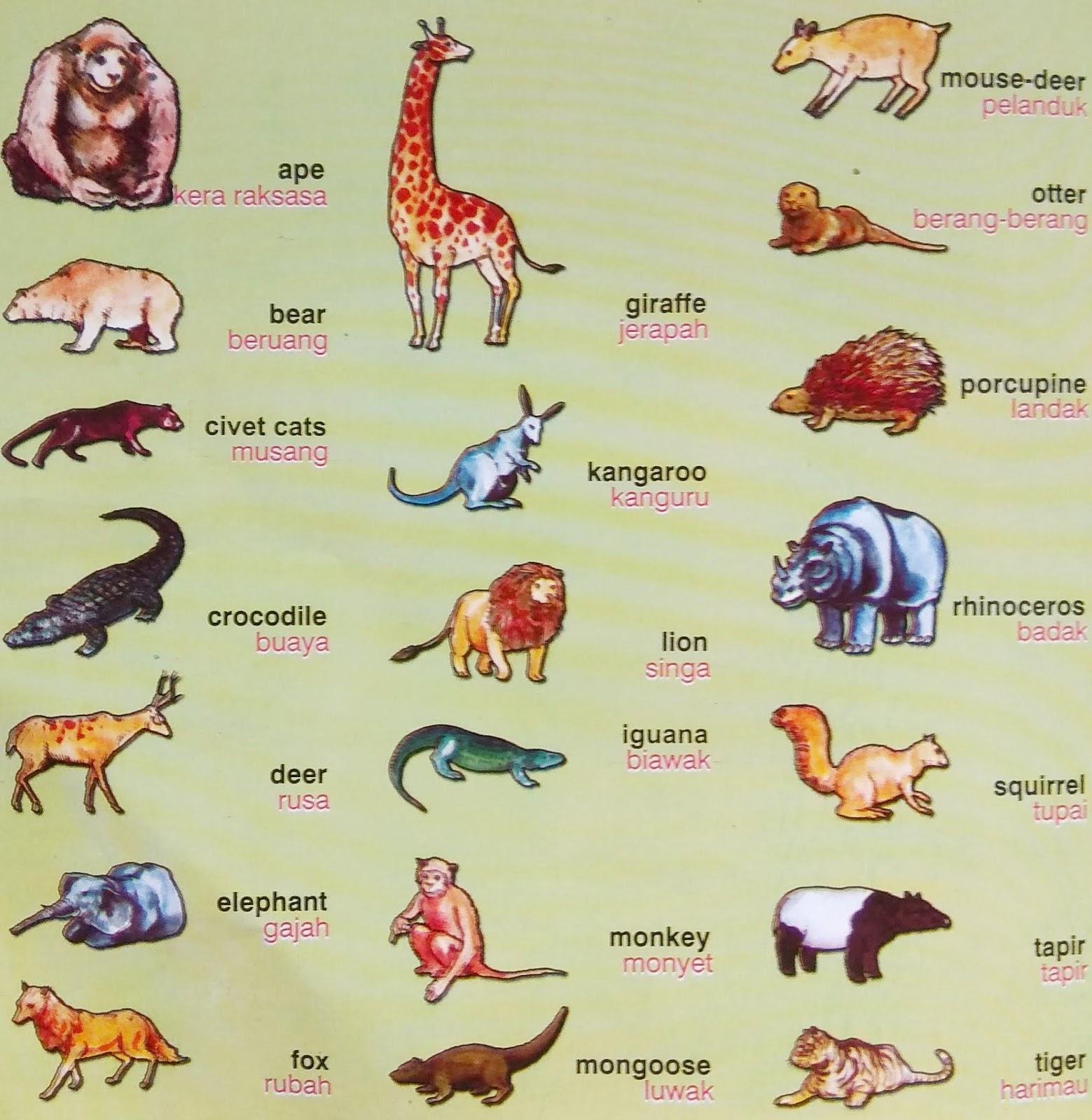 5500 Gambar Hewan Dan Namanya Dalam Bahasa Inggris HD Terbaru