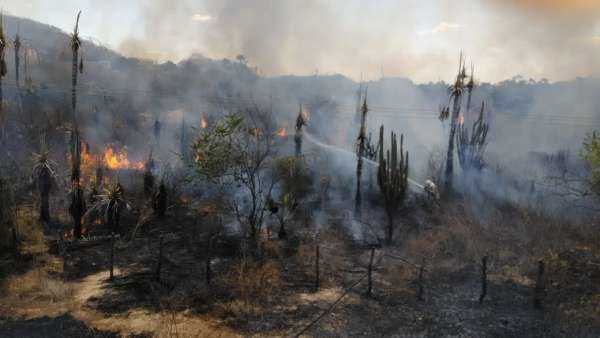 Bombeiros combatem incêndios em Limoeiro do Norte