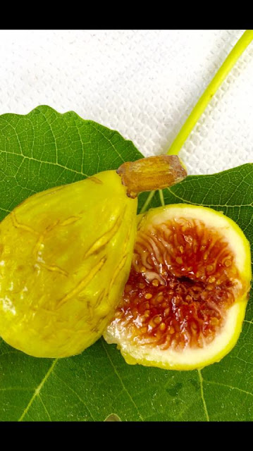 MACOOL Figs