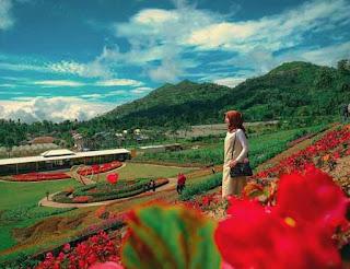 Kutabawa Flower Garden dengan warna-warni bunga cantik