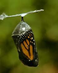 386a2e8373 Magia dos Bordados   Beleza das Plantas - O Prazer de uma Boa ...